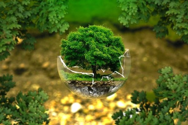 proteggi l'ambiente